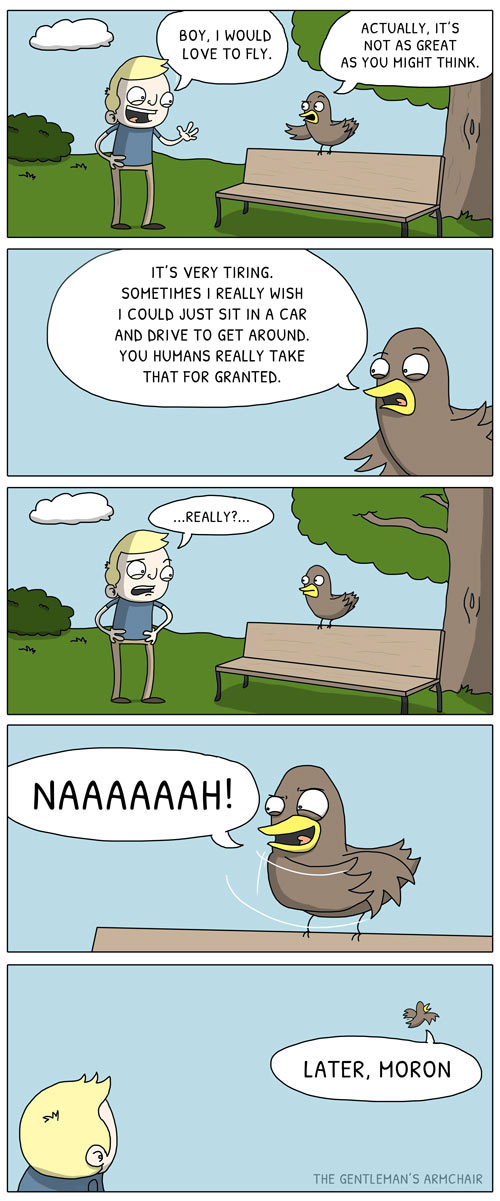 funny-cartoon-bird-park-fly