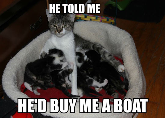 forever resentful cat mom