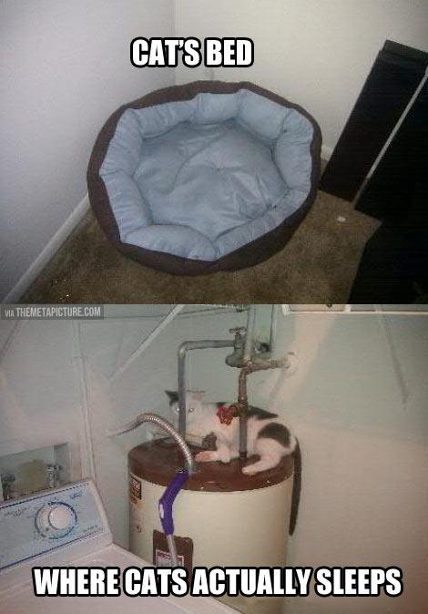 funny-cat-bed-sleep-kitten