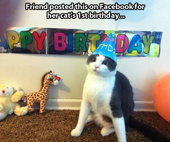 A cat's first birthday…
