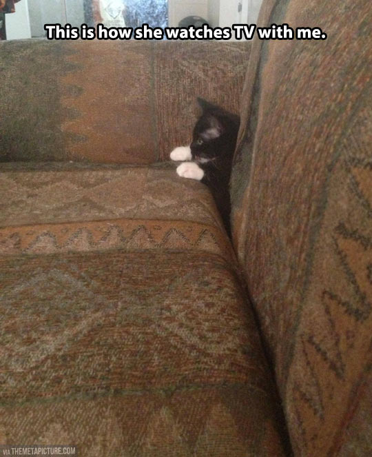 Couch commander…