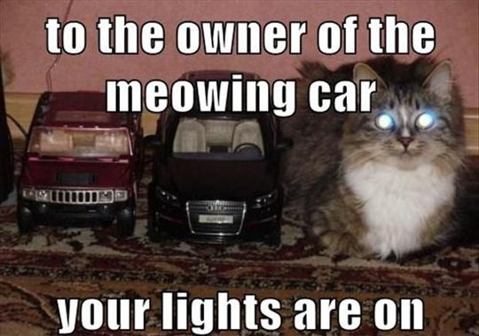 Whoever owns the meowing car…