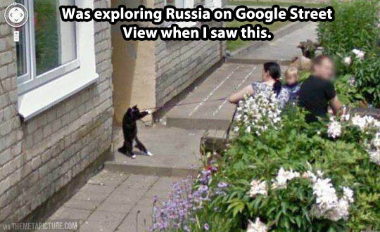 In Soviet Russia, pets walks you…