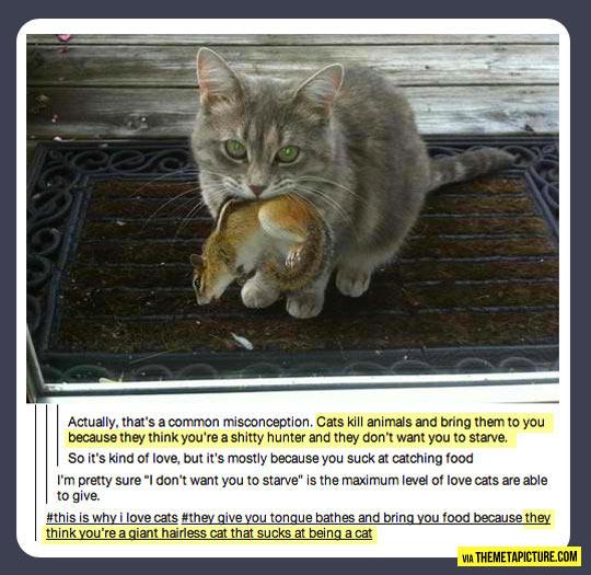 funny-cat-gift-hunt-love