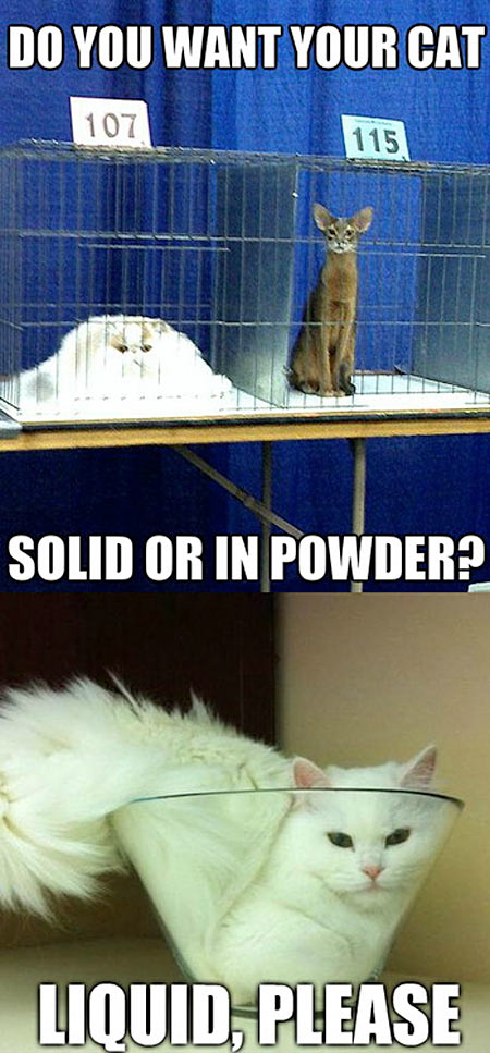 How do you want your cat?