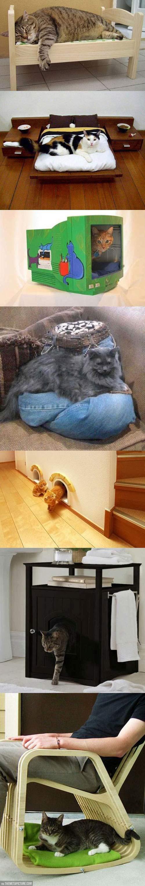 funny-cat-little-furniture