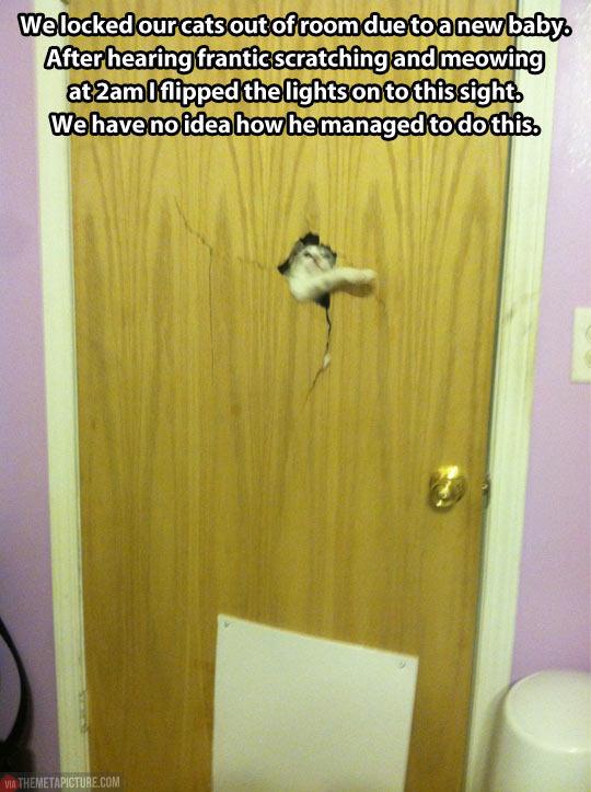 funny-cat-locked-broke-door
