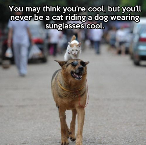 funny-cat-riding-dog-cool
