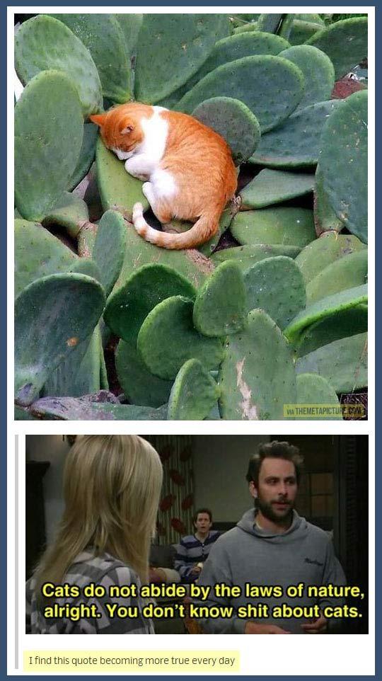 funny-cat-sleeping-cactus