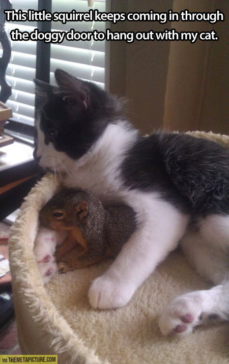 funny-cat-squirrel-sleep-together