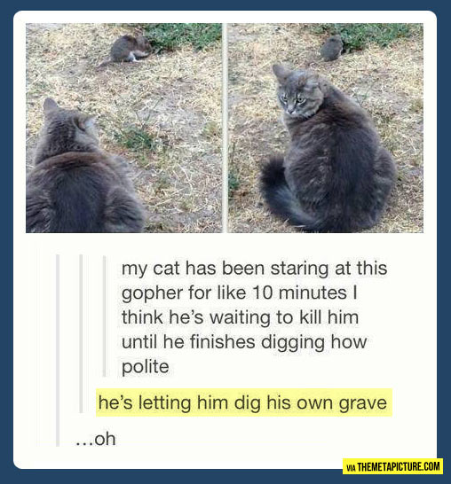 funny-cat-staring-gopher-dig