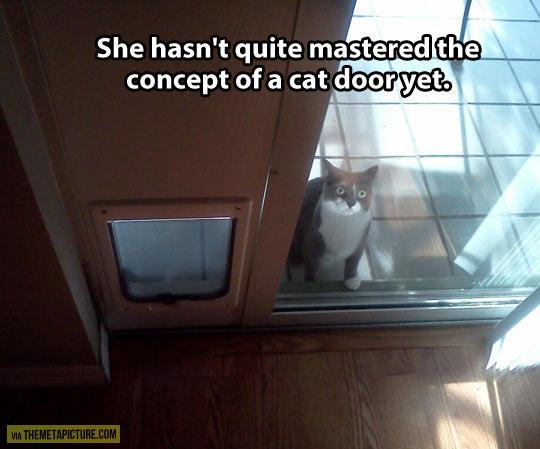 Challenging cat door…