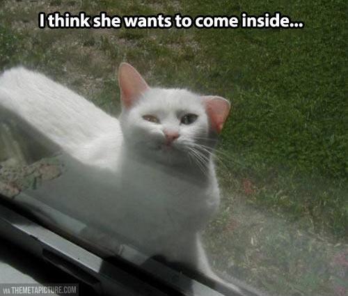 funny-cat-window-watching-inside