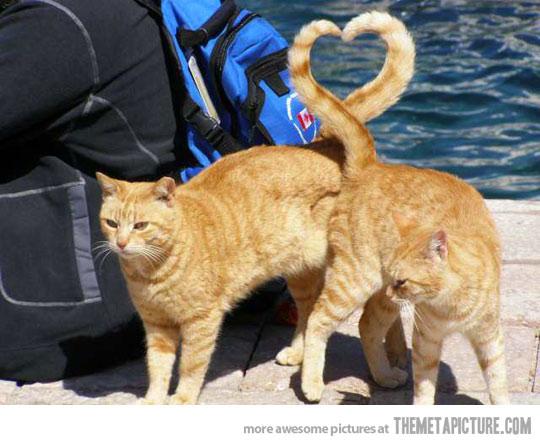 funny-cats-heart-shape