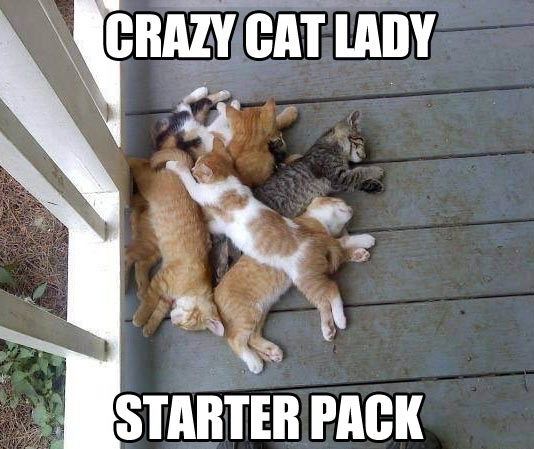 funny-cats-sleeping-starter-pack-lady
