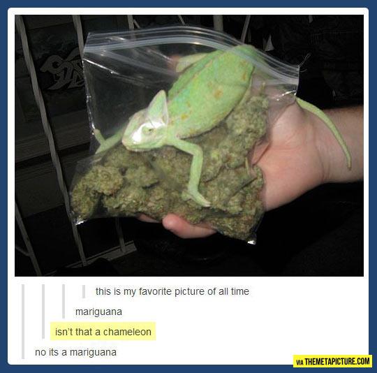 But that's not an iguana…