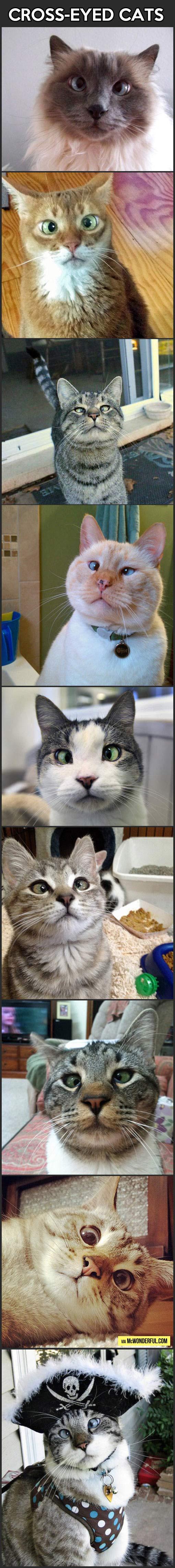 Cross-Eyed Cats…
