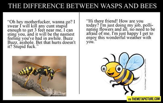funny-difference-wasps-bees