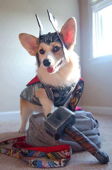 funny-dog-Thor-costume-hammer