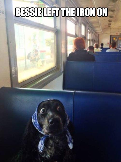 funny-dog-bus-pop-eyes