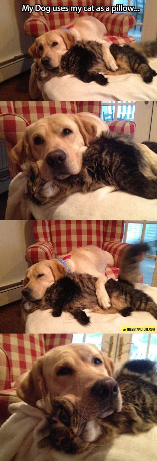 funny-dog-cat-pillow-sleep