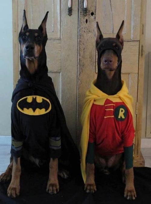 funny-dog-costume-Batman-Robin