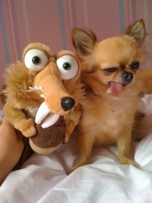 funny-dog-face-Ice-Age-toy