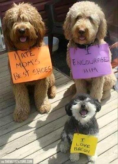 funny-dog-punishment-note