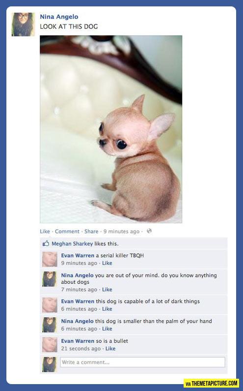 Dangerous little dog…