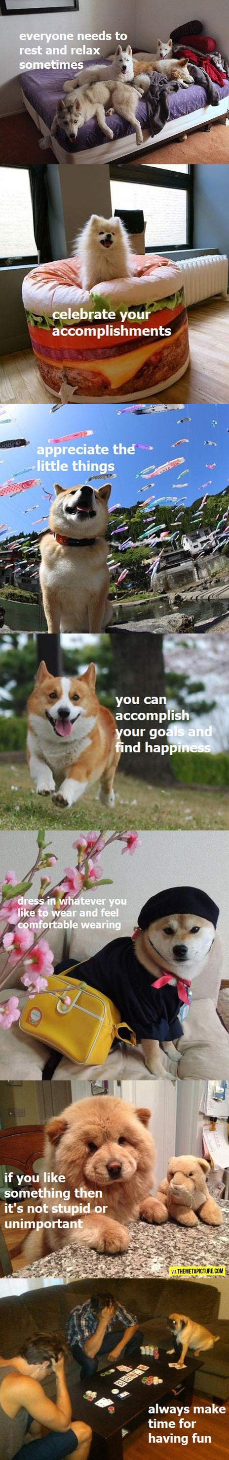 Wise advice from dogs…