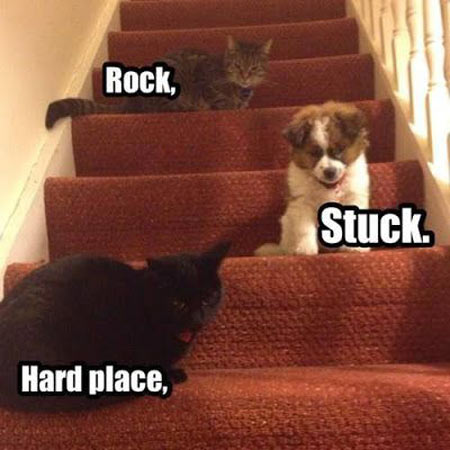 funny-dog-stuck-stairs-cat
