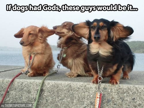 If dogs had gods…