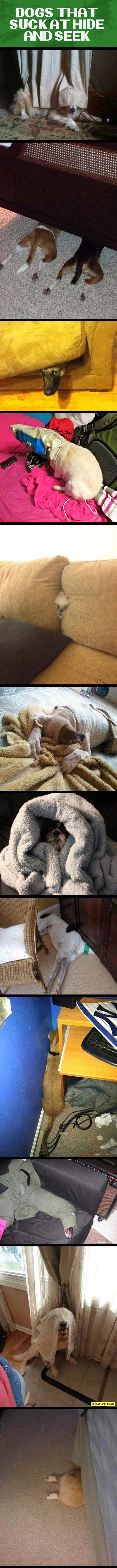 funny-dogs-hiding-seek-bad-cute