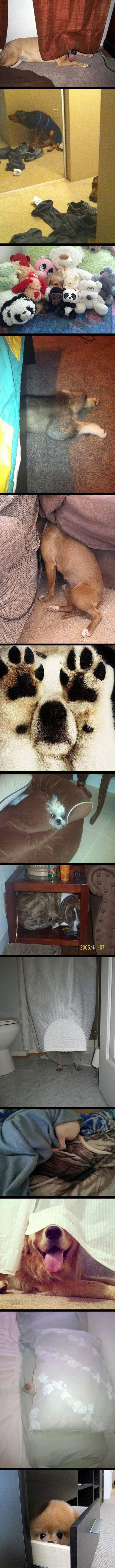 funny-dogs-hiding-seek-bad-stink