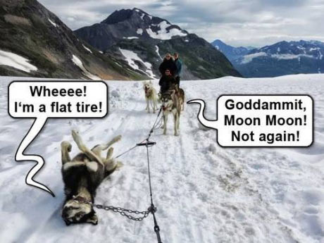 funny-dogs-snow-flat-tire