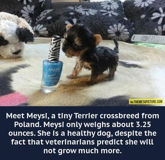 Meet Meysi…