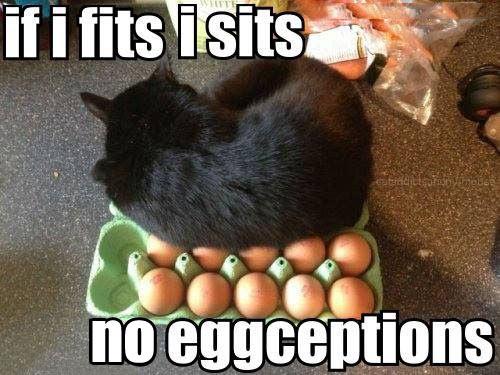 No eggceptions…