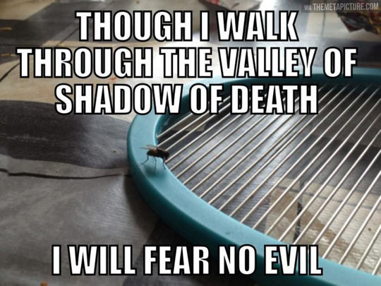 funny-fly-biblical-quote-electricity