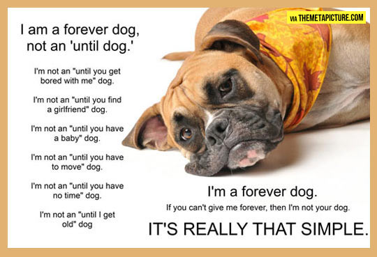 funny-forever-dog-until-forever