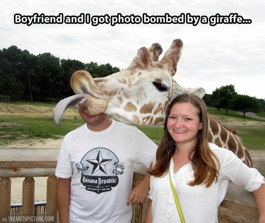 Giraffe photobomb…