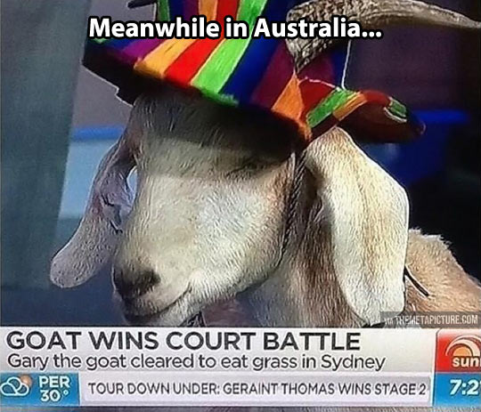 Australia is a weird place…