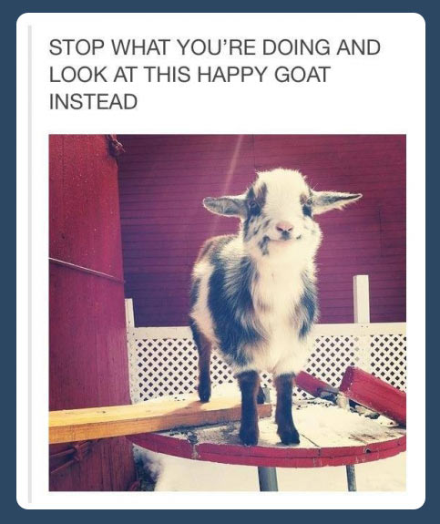 funny-goat-happy-smiling