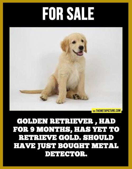 Misleading dog races…