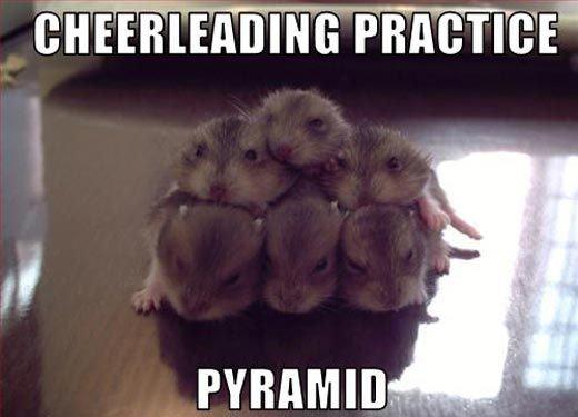 funny-hamster-cheerleading-practice-pyramid
