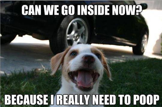 Puppy logic…