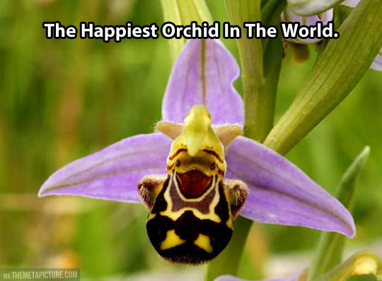The happiest orchid in the planet…