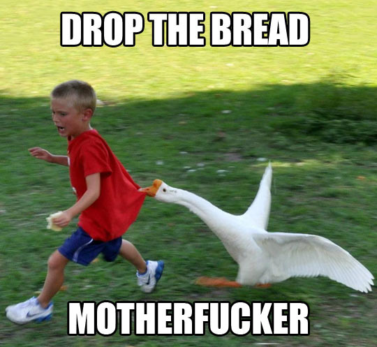 Gooses are mean…
