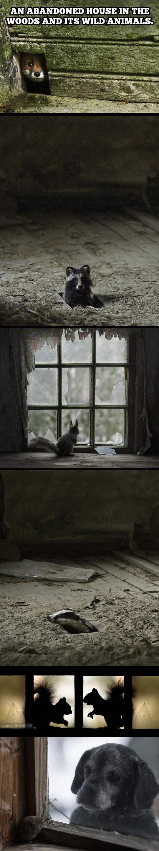 Abandoned house full of life…
