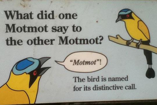 funny-motmot-bird-call-sound