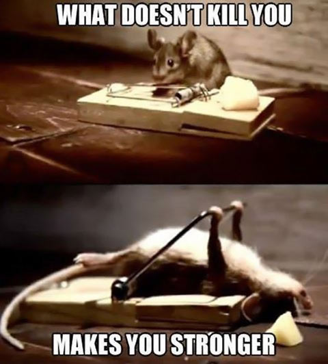 funny-mouse-stronger-cheese-trap